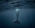Φάλαινα 40 τόνων κόβει βόλτες στις Κυκλάδες