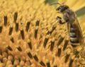 Γιατί μισούμε τις σφήκες και αγαπάμε τις μέλισσες;
