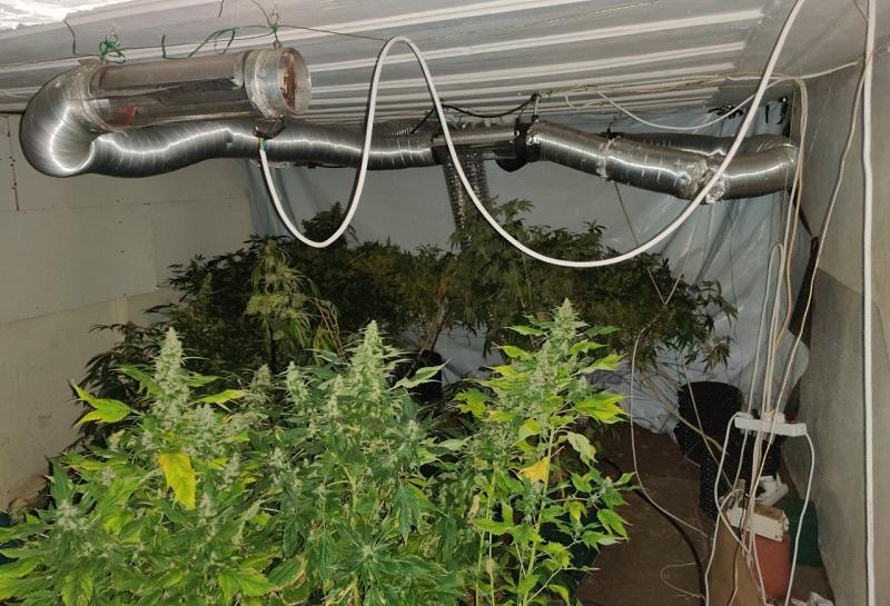 Καλλιεργούσε κάνναβη σε οργανωμένο εργαστήριο υδροπονικής!