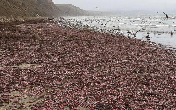 Η παραλία στην Καλιφόρνια που γέμισε με «ψάρια–φαλλούς»! (Εικόνες)