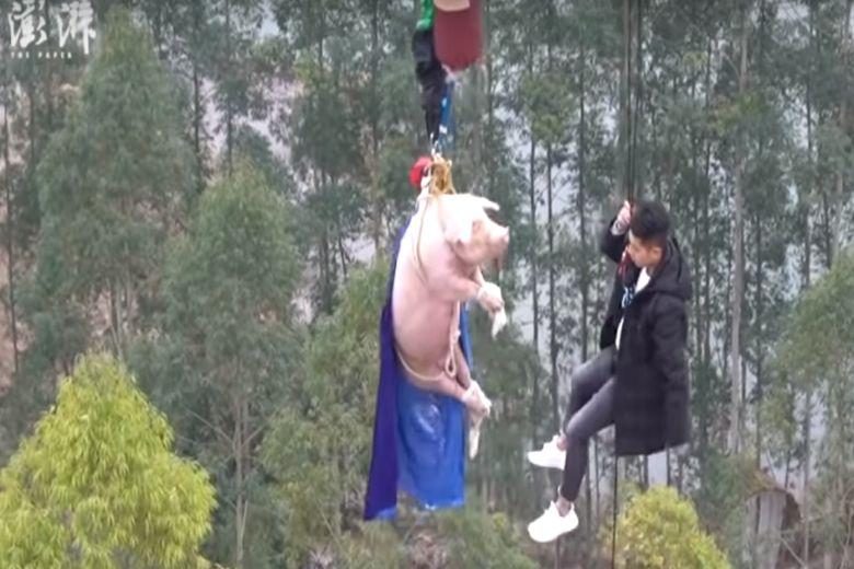 Σάλος στην Κίνα: Έβαλαν γουρούνι να κάνει bungee jumping