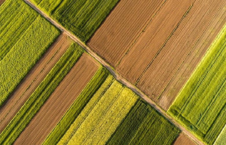 Μηνιαίο Ενημερωτικό Δελτίο Τιμών Αγροτικών Προϊόντων από την Τράπεζα Πειραιώς